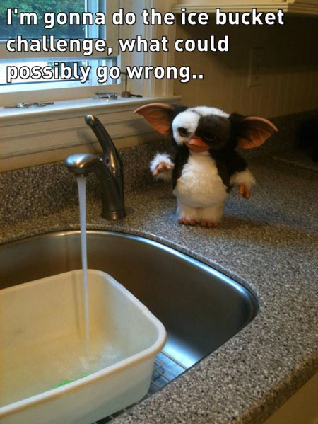 Ice Bucket Challenge with Mogwai from Gremlins