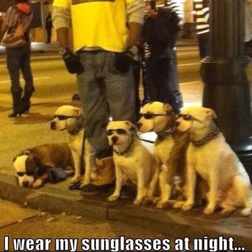80s-memes-sunglasses-at-night