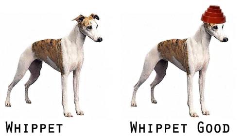 80s-memes-whippet-good