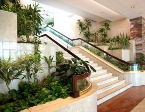 Lush-lobby-plants-002